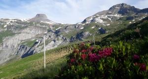 Die Alpenrosen...